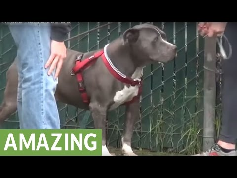 Crying dog at shelter finds new home