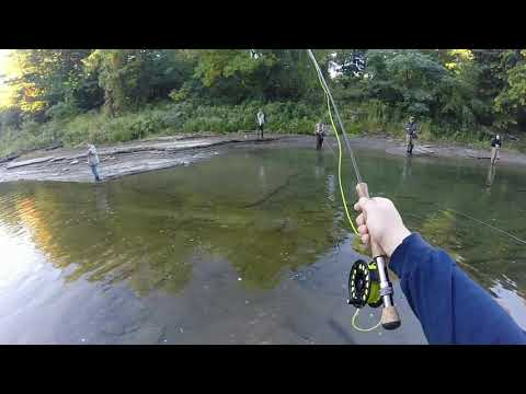 Lake Erie PA Tributary Steelhead Fly Fishing