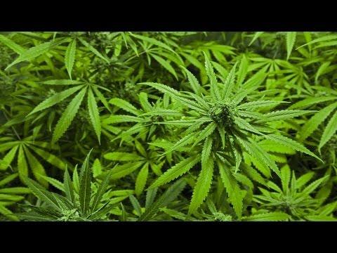 0 Is Marijuana Addictive? | Addiction