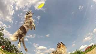 GoPro : Mr.JJ - dogfrisbee slow motion