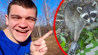 WE CAUGHT RICKY RACCOON!