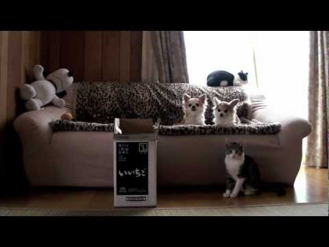 犬より上手な猫 - Cat playing fetch better than dogs -