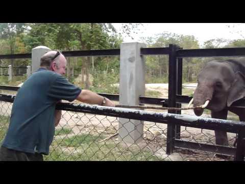Elephant Crocodile Tug of War Tug of War With an Elephant