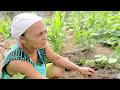 Sistemas Agroecológicos e acesso a mercados