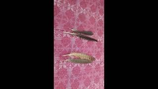काले कौवे और उल्लू के पंख से काला जादू| BLACK MAGIC FROM CROW AND OWL FEATHER Contact No 7982256503