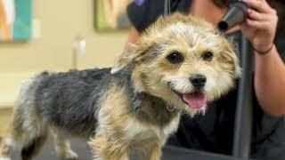 Reber Ranch | Kent Pet Store, Groomer, Dog Park & Vet