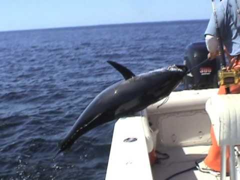 Cape cod deep sea fishing best of 2011 for Cape cod deep sea fishing