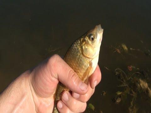 Ловушка для рыбы 2. Fishing trap.