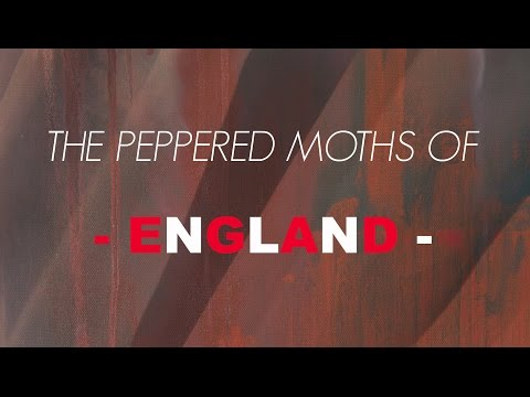 The Peppered Moths of England