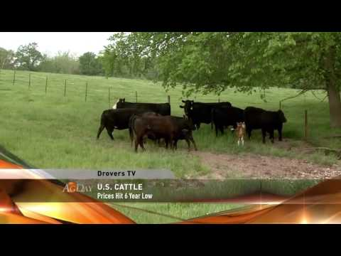 Agday - Cattle Futures Slip to Six-Year Low - 10/13/2016