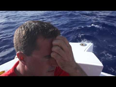 тигровая акула на борт.m2ts