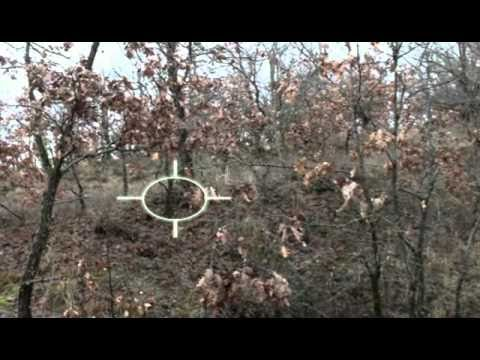 Κυνήγι Μπεκάτσας — KinigiVideo. GR — ΜΠΕΚΑΤΣΟΣΚΥΛΑ ΕΝ ΔΡΑΣΕΙ