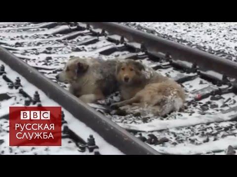 Украинские собаки на рельсах вернулись домой
