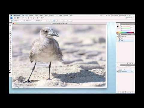 Photoshop - Image Processing