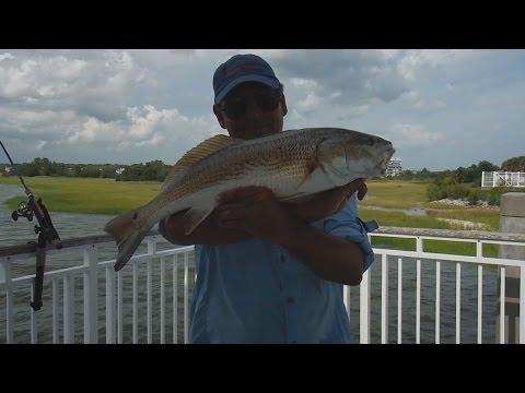 Jiggin videolike for Mt pleasant fishing pier