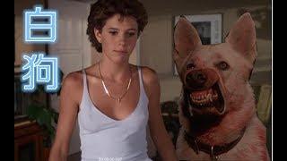 【美男子】美女爱上嗜血残暴大白狗,杀人工具?豆瓣7.9!美国80年代高分经典《白狗》