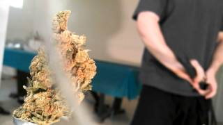 [Samurai Sword Vs Big Bud] Video