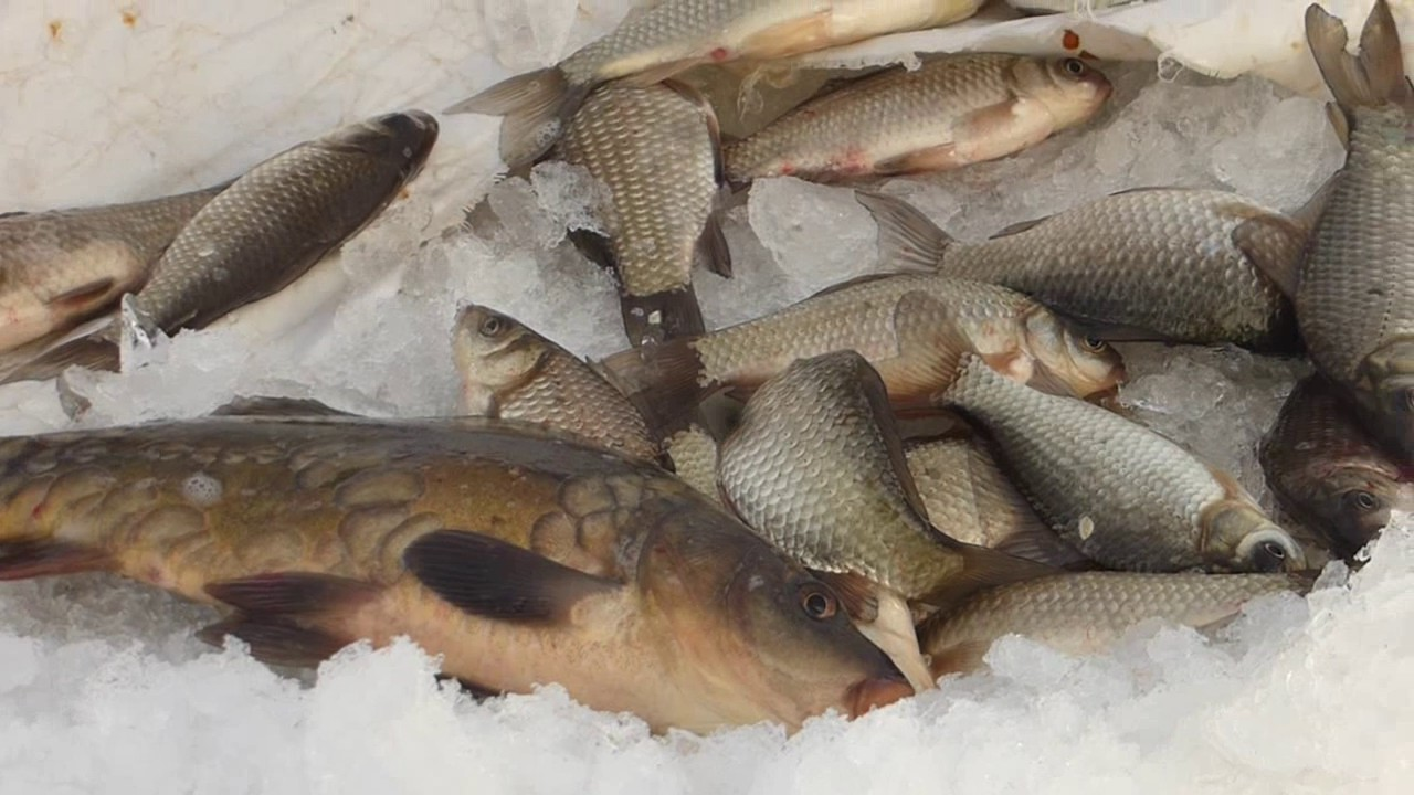 видео рыбалка в перми на карася 2017г