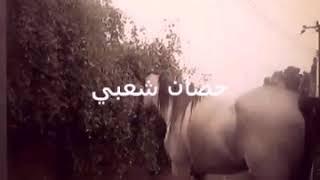 احصان شعبي