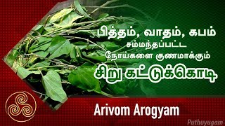 பித்தம், வாதம், கபம் சம்மந்தப்பட்ட நோய்களை குணமாக்கும் சிறு கட்டுக்கொடி | Arivom Arogyam