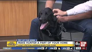Pet of the week: Hunter is a 3-year-old Labrador Retriever mix with a heart of gold