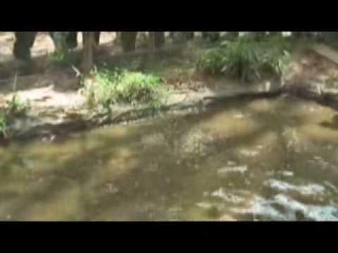 5นาทีที่เมืองตรัง ปลาบ่อพลาสติก Music Videos