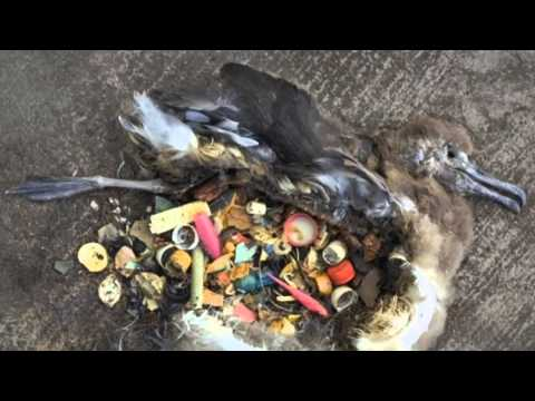 Effects of Trash and Marinelife