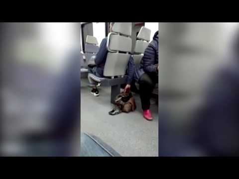 Ladrón roba un bolso en un tren de Irún y la víctima lo recupera