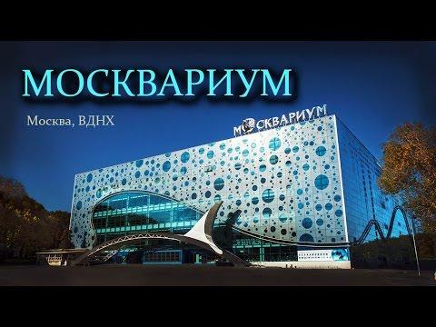 Москвариум. Океанариум на ВДНХ в Москве