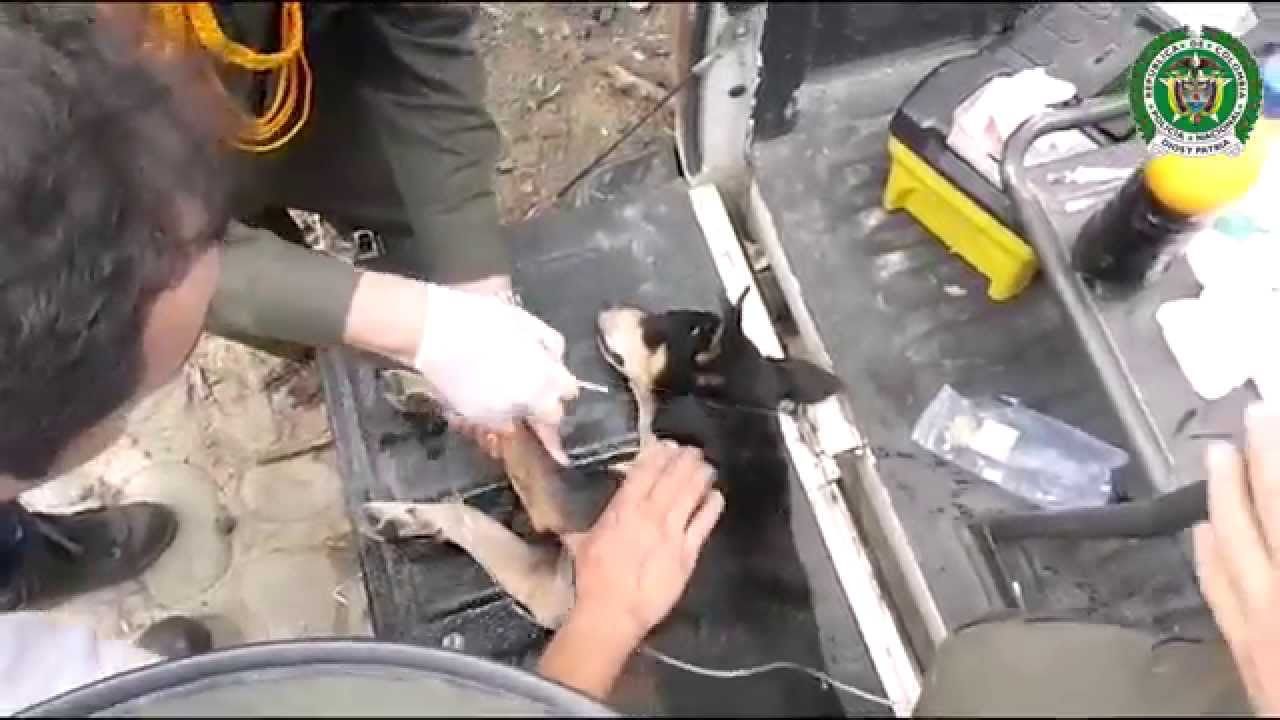 [Dog saved from drowning!] Video