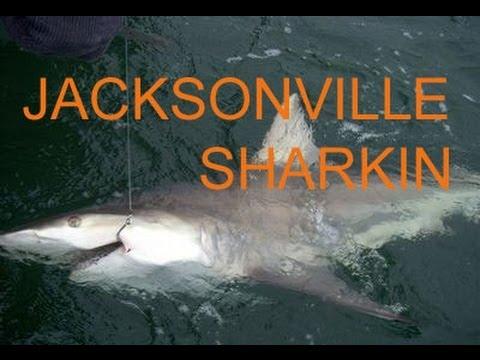 Jacksonville fishing,Spring shark fishing