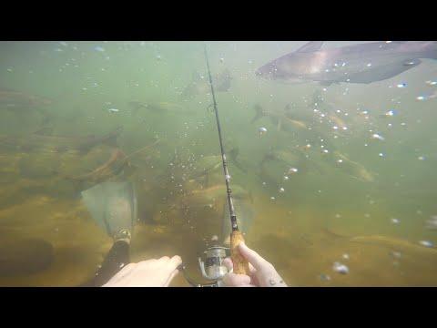 рыболовное озера тенис