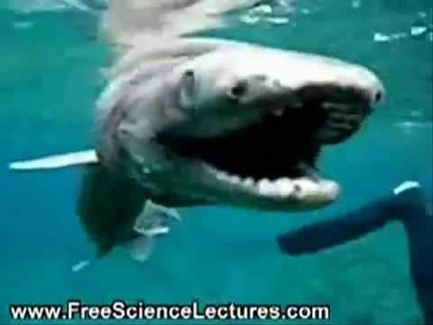Belgesel - 80 Milyon Yıl Öncesine Ait Türdeki Bir Köpek Balığı!