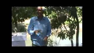 Honey bee farming(મધમાખી ઉછેર)KVK SURAT - NAVSARI AGRICULTURAL UNIVERSITY