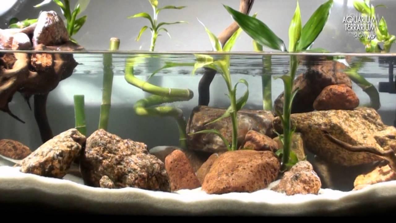 Aquascape Setup Series Aqua Terrarium Bamboo Style