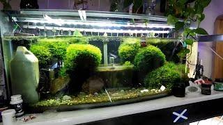 Improved Green Shrimp Heaven - Crystal Red Shrimp Tank Plants Filter etc