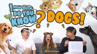 How Much Do You Know - Dogs