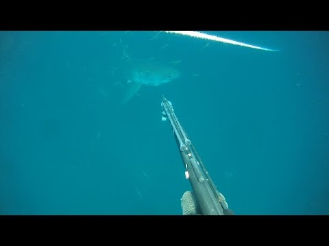 Great White  sneaks up on diver in Gulf of Mexico Extended Version