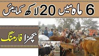Bachra Farming Business Plan - Small Business Ideas - Farming In Pakistan & India
