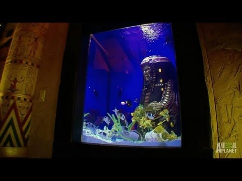 Roxbury Tank Reveal | Tanked