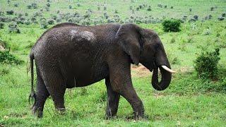 Holiday in Kenya   Masai Mara Safari   The big 5
