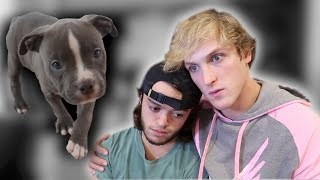 Evan's dog died...