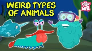 Weird Animals In The World - The Dr. Binocs Show |  Funny Animals Cartoons Just for Kids & Children