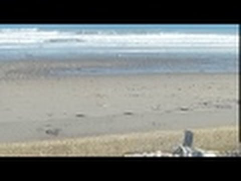 metal detecting storm tides