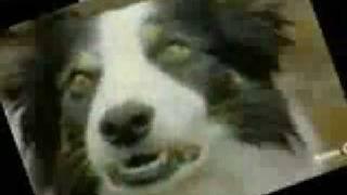 Watch Bonzo Dog Band Jollity Farm video