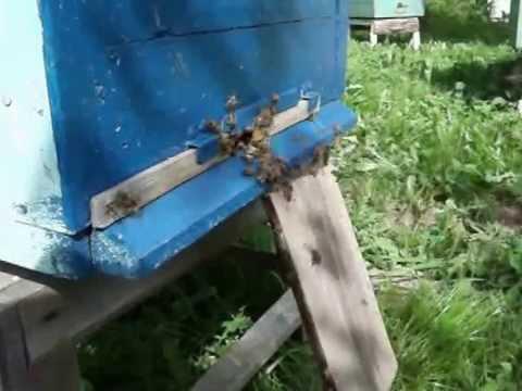 Пчеловодство. Трутовка - задачка и решение.