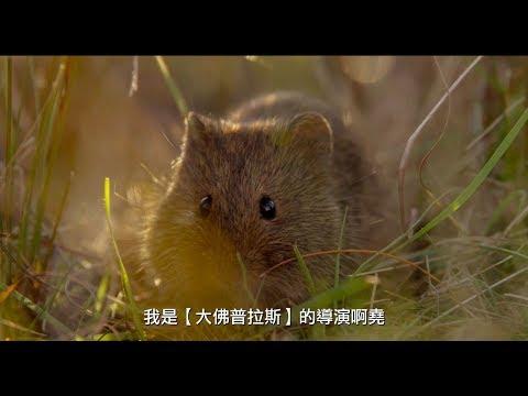 【地球:奇蹟的一天】台灣限定趣味版預告 05/04震撼視界