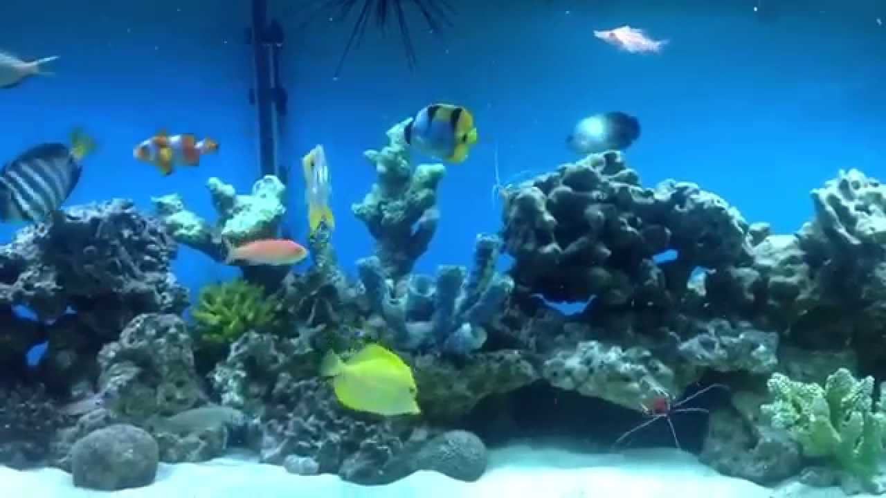 120 gallon fish only saltwater tank youtube for Fish only saltwater tank