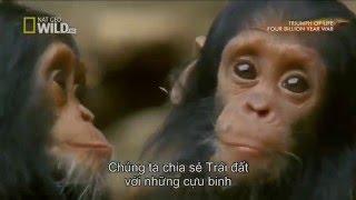 Động Vật Hoang Dã - Cuộc Chiến Sinh Tồn - Xem Video Thế Giới Động Vật