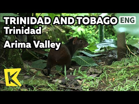 【K】Trinidad&Tobago Travel-Trinidad[트리니다드 토바고 여행-트리니다드]아리마 계곡/Arima Valley/Rainforest/Trekking/Animal